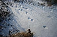 tracks-on-snow